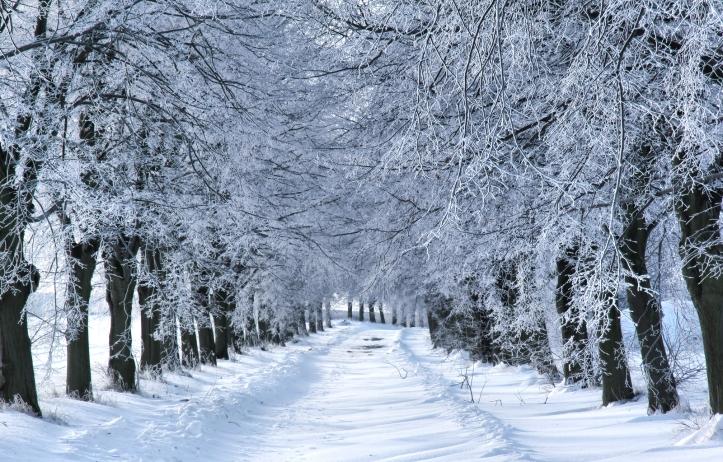 Winter-Wonderland.jpeg